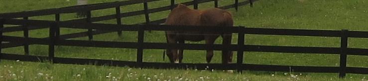 horsefarm-5-20-13