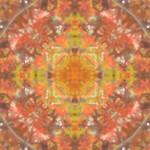 fall-leaves-mandala-lildeep-1